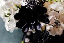 Shades of Black, Slate, Midnight