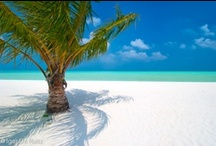 Maldives / It 's time to get away to enjoy a hot weather and to discover the wonderful Madivian scuba diving.