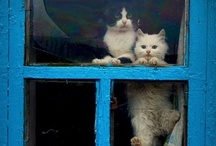 Here Kitty Kitty!!!   / Cats and their stuff!!!