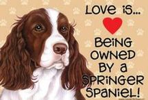 English Springer Spaniels / by Susan McRae