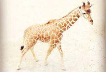 cute animals  / by Erin Austen Abbott | Amelia