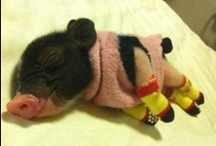 Cute Animals / Cute and cuddly baby animals