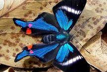 Butterfly / by Victoria Radochyna