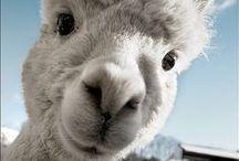 ANIMAL | kingdom / Beautiful shots of beautiful creatures