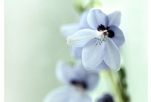 ~ Inspire.....Blue ~ / Beautifully calm and gentle....