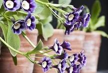 ~ Garden dreams ~ / Beautiful treasures...