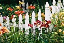 Gardening Ideas / by Robin Danforth