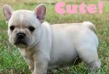 "Our Favorite Dogs / Add a photo of your favorite dog! If you would like an invitation to this board, just leave a comment on the Frenchie ""Cute"" pin and I will get right back to you."