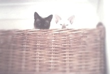 George & Oscar...and other CATS / oh hai there we iz kittehz / by Emma Marie Lea