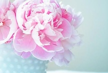 Peonies / Peonies are one of my favourite flowers, love having them around the house