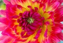 Mooie Bloemen! / Wij houden van mooie bloemen bezorgen en genieten ervan om de ontvangers blij te verrassen met mooie bloeiende bloemen! / by verstuureenbloemetje.nl