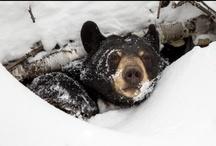 Cubby Bears / by Emma Marie Lea