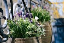 OUTDOOR / GARDEN / Des idées pour aménager un jardin en ville, une terrasse, un balcon