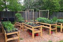 Garden / Ideas!