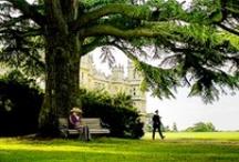Downton Abbey / by Shannon Mavica