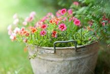 Garden / by YifatS