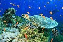 Ocean, sea, water - educational for children / Animals in ocean, in the sea, seashore, penguins, fish, seals, whales, jellyfish,.. educational for children
