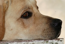 Dogs / by YifatS