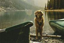 pups / by Kendra O'Neill