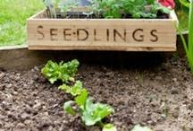 Household/Gardening Hints