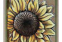 Cards - Floral / by Kristine Kubitz Fossmeyer
