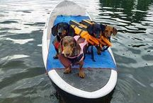 Pets Who Paddle / Who do you like to paddle with? Send a picture of you and your paddling companion to clloyd@americancanoe.org to be featured on this board!