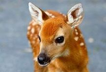 Lovely creatures / cute animals, favourite animlals
