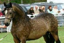 Cavalli e stalle