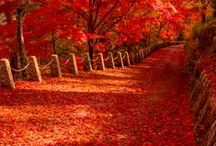 I love reds