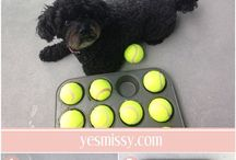 Games and accessories for dogs / Bored, don't know what helpful stuff to buy for your dog?