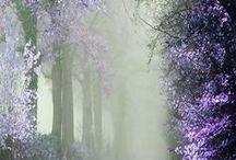 love ::: nature
