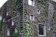 Living Walls / Living walls, vertical gardens, and inspiration for small urban gardening.