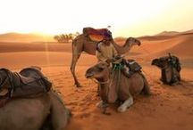 Painting inspiration- Desert & Down under Animals / by Ashley Anderson