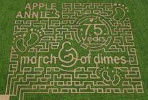 Corn Mazes / #cornmazes #corn #mazes