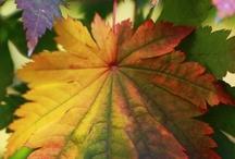 Seasons: Fall into Autumn / Season of Fall Autumn Solstice