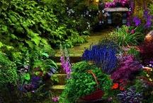 Gardening / by Ashley Anderson