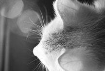 outstanding cat photos