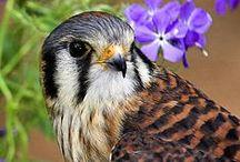 Painting inspiration- Birds
