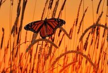 Painting inspiration- Bugs/ Reptiles & Amphibians / by Ashley Anderson
