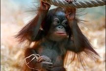 Primates / by Mary Goutermont Standard