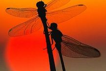 Dragonflies / by Mary Goutermont Standard