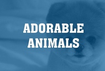 Adorable Animals / by Intent.com