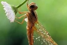 Bugs and Beyond
