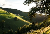 B L AC K   F O R E S T / wonderful landscapes - friendly people - delicious food - great hospitality