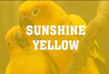 Sunshine Yellow / Yellow is the color of sunshine. It's associated with joy, happiness, intellect, and energy.  Yellow produces a warming effect, arouses cheerfulness, stimulates mental activity, and generates muscle energy.