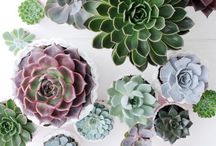 GISELB - Plants & flowers / Inspirated by mineral & vegetal Flowers & plants  Green