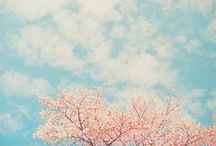 Spring Song / by Maho