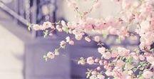 4 SEASONS - SPRING / Die Blumen des Frühlings sind die Träume des Winters (Khalil Gibran)