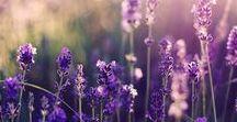 4 SEASONS - SUMMER / Früh wach sein - das Fenster weit öffnen - die Vögel zwitschern hören - es duftet nach den Blumen im Garten, die ihre Blüten öffnen - das ist Sommer!