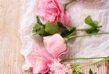 PINKS . CORAℓS  / Pink is sweet - always
